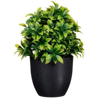 Sold Out 🎉🌟 Add a refreshing look flourish all year round with this artificial leafy potted plant in a black pot. . . Tap image for price and product details. . . . . . #homeaccessories #gifts #kalaful_decor #photo -#greenplant #Artificialplant #nairobikenya #homedecor . .